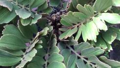 Cycads & Succulent